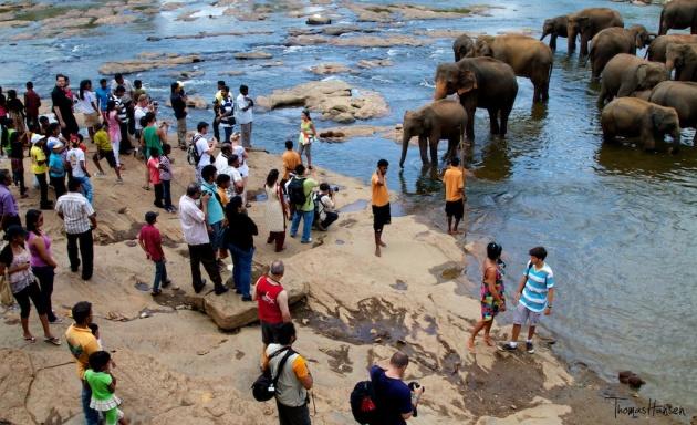 Pinnawala Elephant Orphanage - Sri Lanka 1