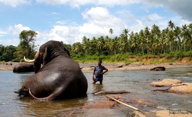 Pinnawala Elephant Orphanage - Sri Lanka 10