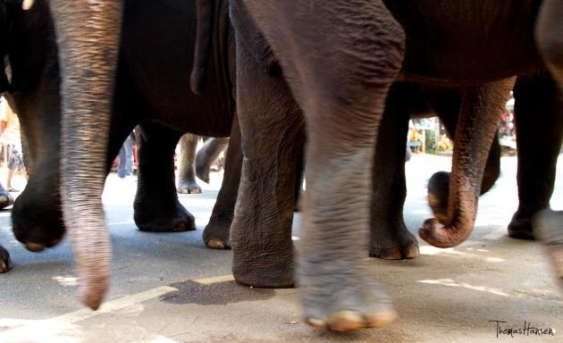 Pinnawala Elephant Orphanage - Sri Lanka 13