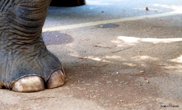 Pinnawala Elephant Orphanage - Sri Lanka 14