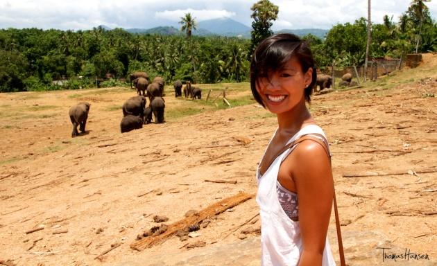 Pinnawala Elephant Orphanage - Sri Lanka 15
