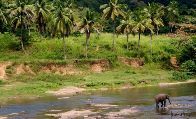 Pinnawala Elephant Orphanage - Sri Lanka 5