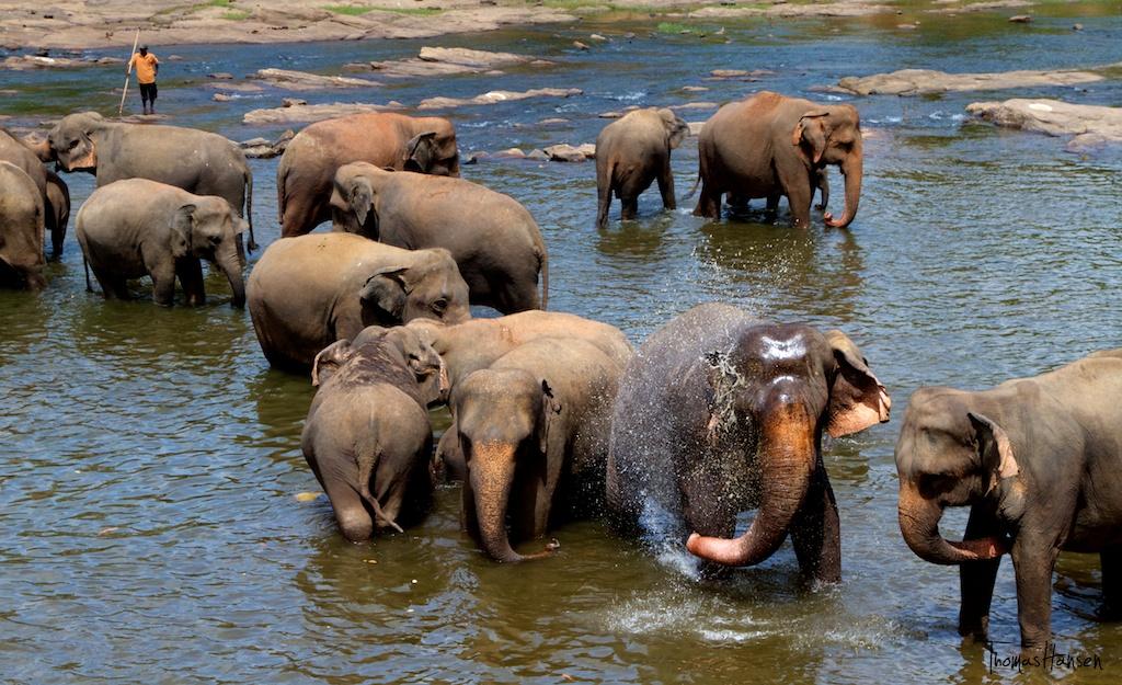 Imageresult for pinnawala elephant orphanage bath time