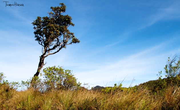 Horton Plains National Park 1 - Sri Lanka