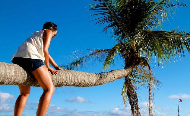 Climbing a Palm Tree - Philippines 04