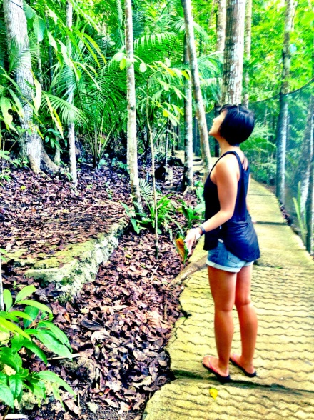 Looking for Tarsiers in Loboc Bohol Philippines