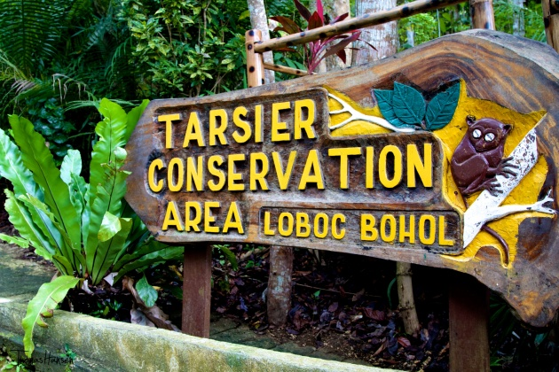 Tarsier Conservation Area Loboc Bohol Philippines