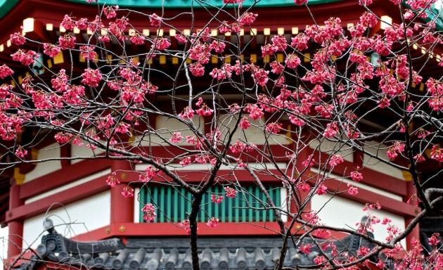 Japan Sakura - Cherry Blossom Flowers 02