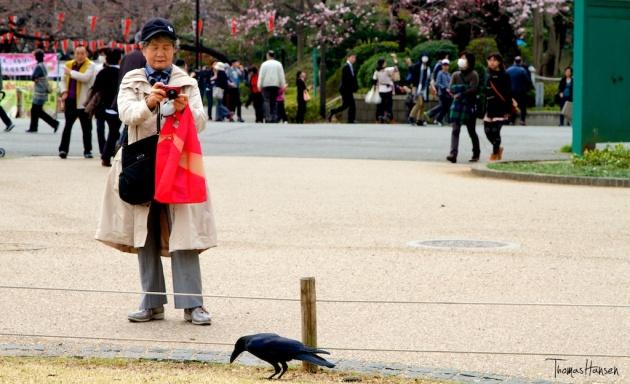Crow in Ueno Park - Tokyo Japan