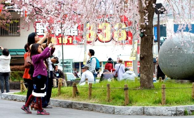 Sakura Ueno Park - Tokyo Japan 03