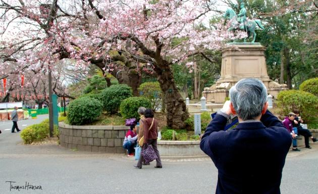 Sakura Ueno Park - Tokyo Japan
