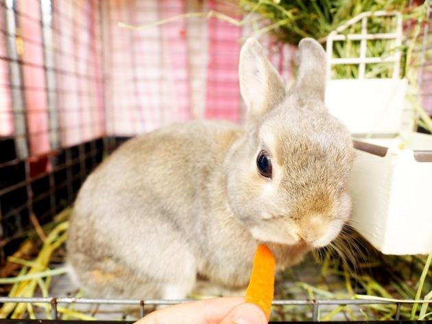 rabbit-pet-cafe-tokyo-japan-ra-a-g-f-01.jpg