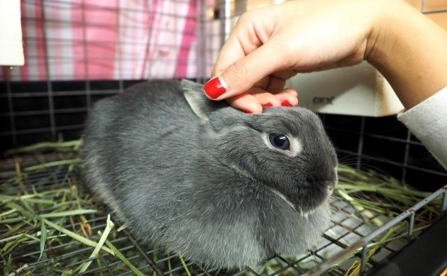 rabbit-pet-cafe-tokyo-japan-ra-a-g-f-02.jpg