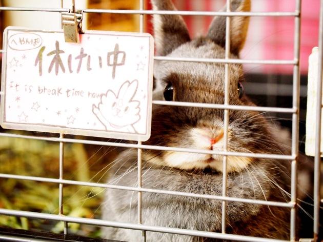 rabbit-pet-cafe-tokyo-japan-ra-a-g-f-05.jpg