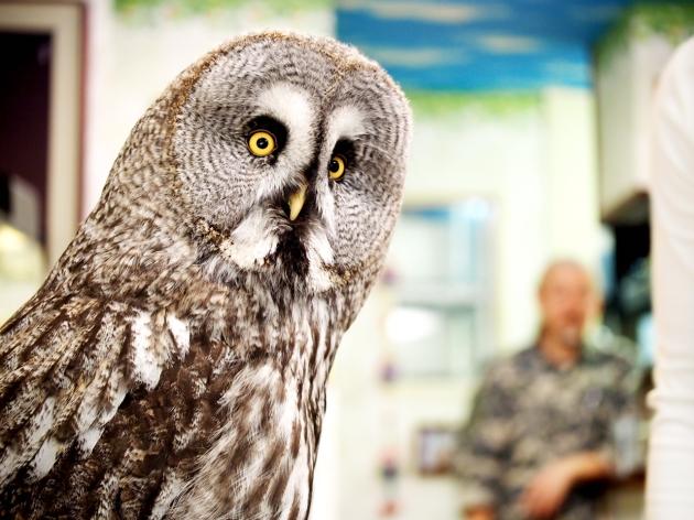 Owl Bird Pet Cafe Baron - Tokyo Japan 10